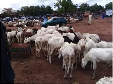 Mali – Mouton pour l'Aïd